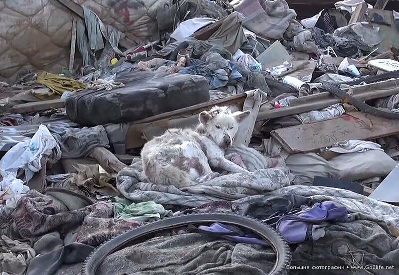 Бездомный пес жил на мусорной куче, но был спасен