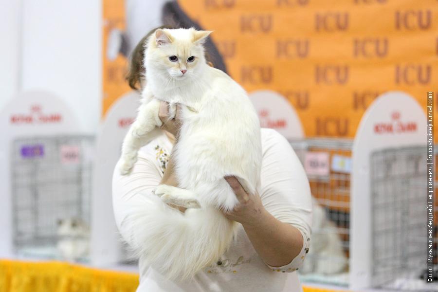 Международная выставка кошек «Содружество 2013» — гран-при Royal Canin