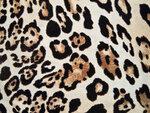 Leopard (4).jpg