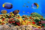 Underwater (4).jpg