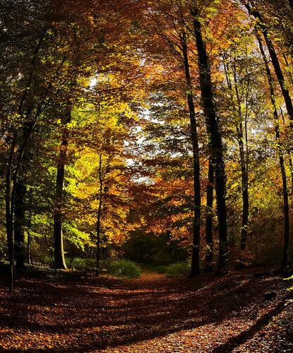 Осенняя бочка