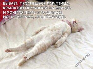 http://img-fotki.yandex.ru/get/9760/194408087.5/0_ba6dd_18f030a7_M.jpg