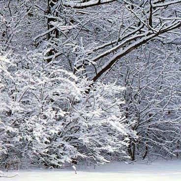 С Новым годом! Послание Деда Мороза на ветках деревьев открытки фото рисунки картинки поздравления