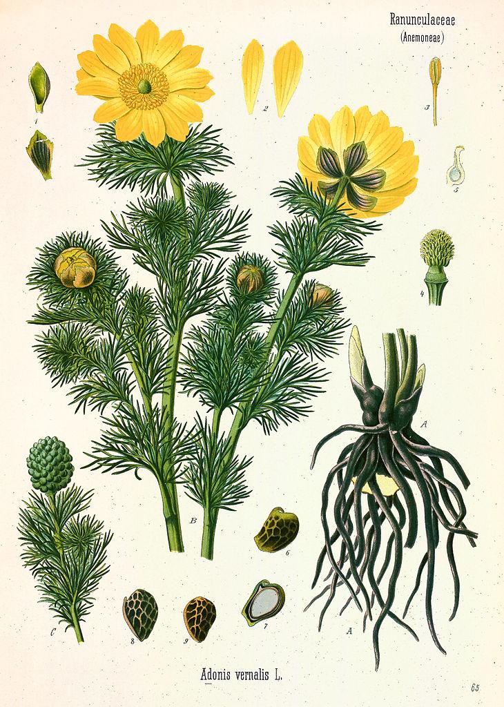 Урганчинский ботанический заказник