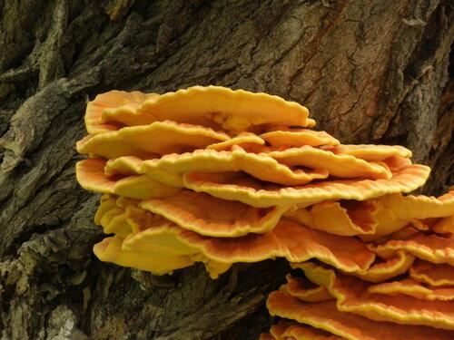 Деревянные грибочки
