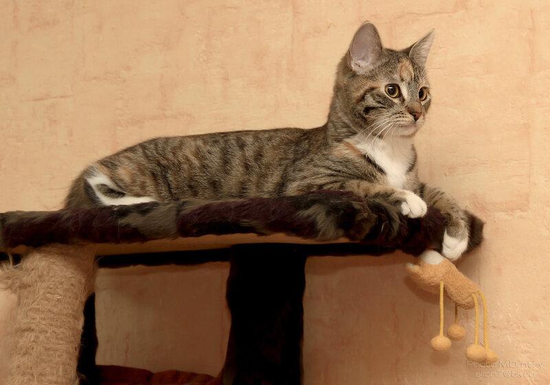 Коты & кошки (2014)