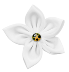 shh_asktdaisy_whitefabricflower1.png