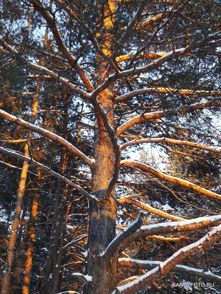 Фотографии зимнего леса на закате