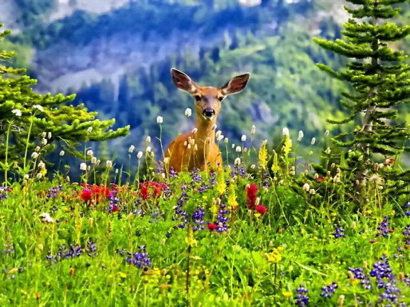 Картинки в мире живой природы
