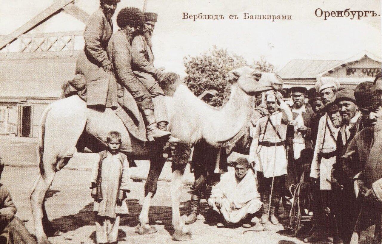 Верблюд с башкирами