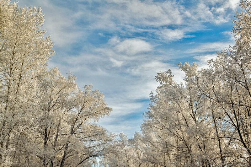 Серебристые цвета зимнего пейзажа