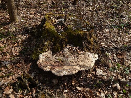 Чувашия, окр. г. Шумерля. Вырубка возле Чёрного леса. 22 апреля 2014 г. Автор фото: Сергей Апполонов