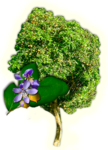 гваяковое дерево aromacharm
