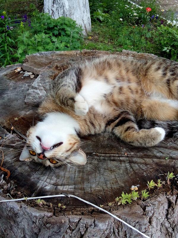 Кот на пне.jpg