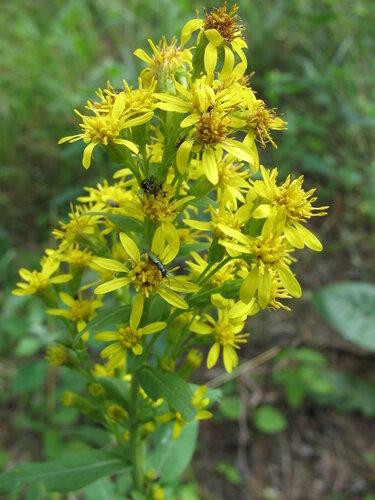 Лесной цветок с жучками