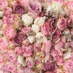 roses (3).jpg