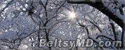 Синоптики не обещают снега на Рождество по новому стилю