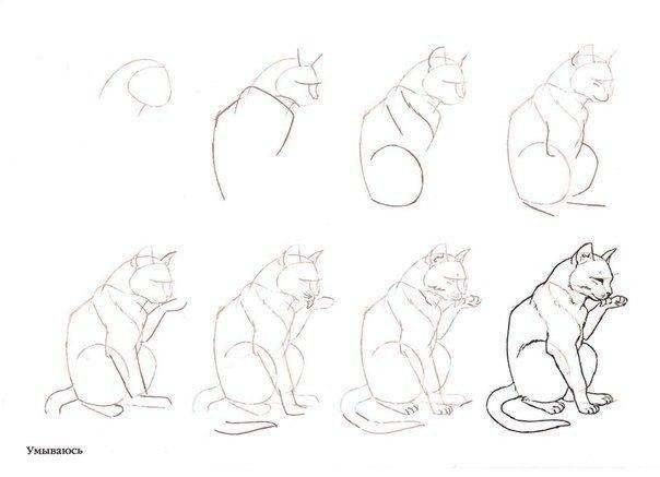 Рисунки животных для начинающих пошаговое фото