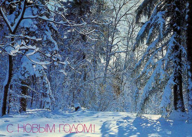 Заснеженный лес. С Новым годом!