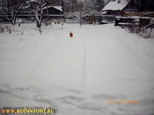 земляника зимой