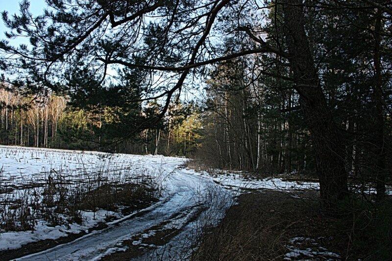 такая зима в лесу