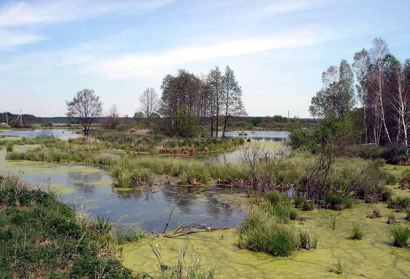 Татарско-Ахметьевское болото