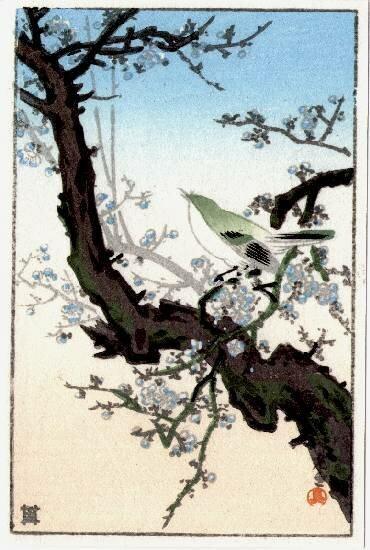 Koitsu TSUCHIYA