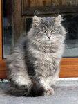 Церковный кот