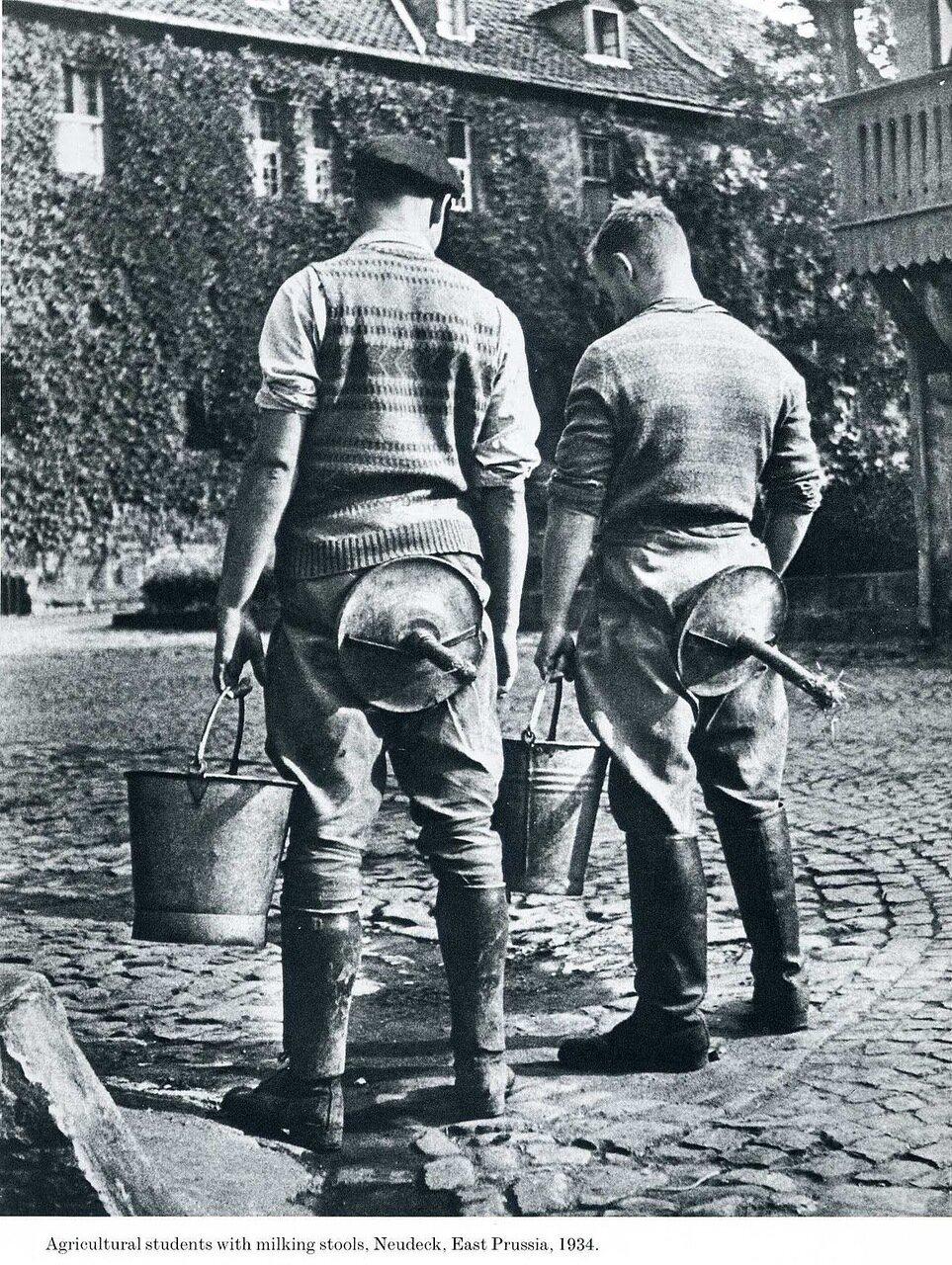 1934. Студенты Сельскохозинститута со стульями для дойки, Нойдек