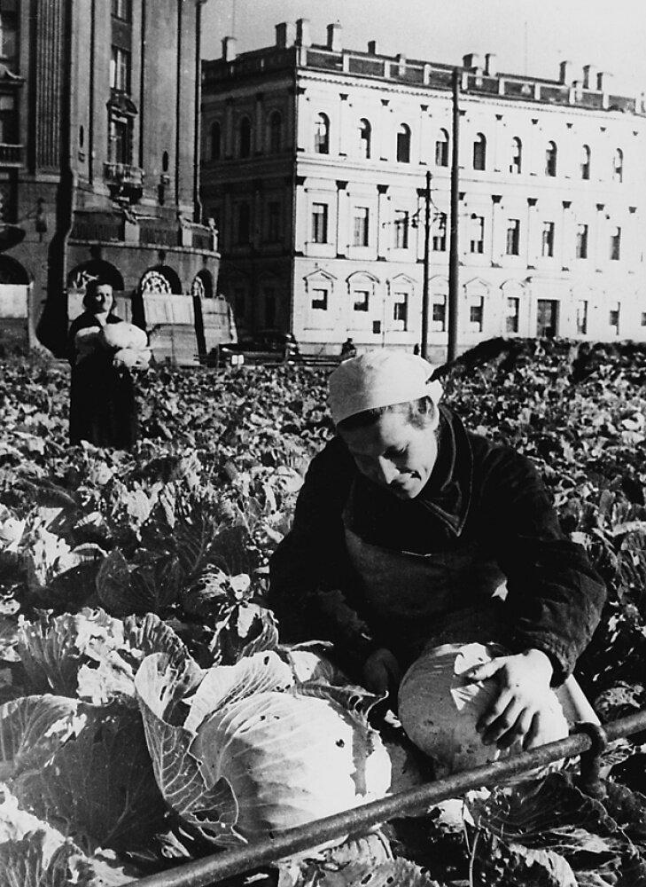Выращивание овощей на площади у Исаакиевского собора во время блокады. 1942 г.