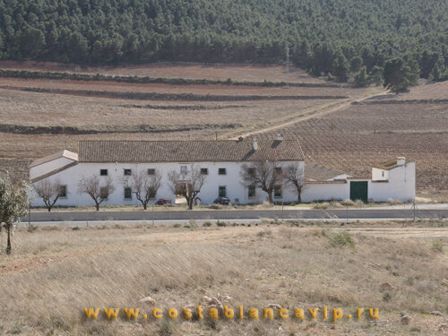 Виноградник в Ontinyent, виноградник в Испании, виноградник в Онтиниенте, недвижимость в Испании, дом в Испании, недвижимость в Валенсии, винные погреба в Валенсии, виноградник в Валенсии, Коста Бланка, CostablancaVIP, вилла в Испании, бизнес в Испании, агробизнес в Испании