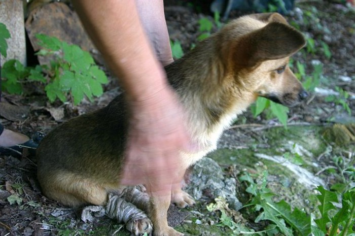 Как мужик собаке помог