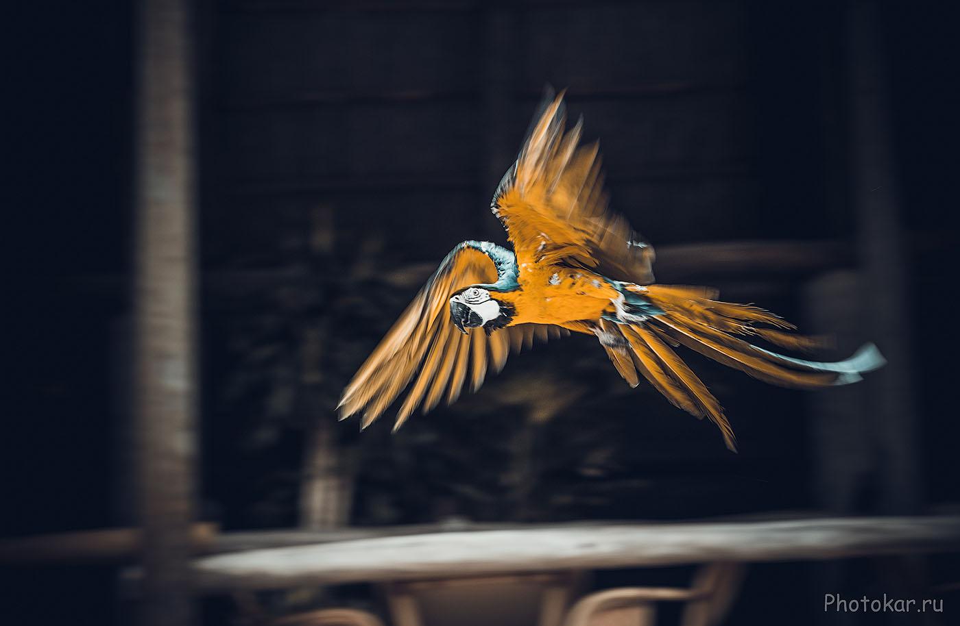 Фотография 11. Для съемки птиц в полете важное значение имеет не только скорость фокусировки объектива, но и работа автофокуса тушки. У Никон Д610 фокус работает отлично! Параметры съемки: 1/160, EV +0.33, f/5.6, ISO 200, фокусное 160 мм)