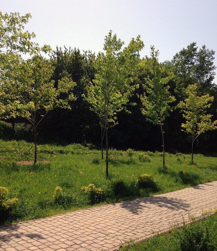 деревья на солнце.jpg