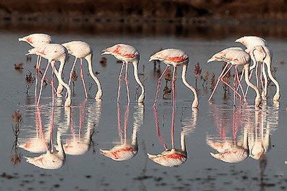 Немецкий зоопарк обнаружил, что 15 фламинго погибли