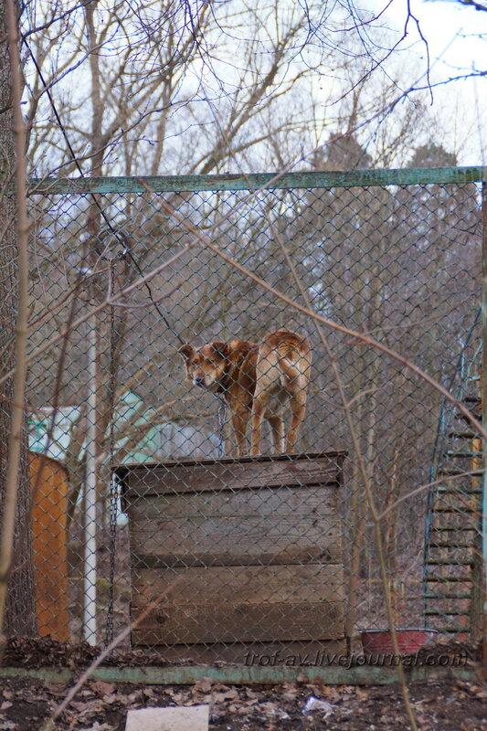Собака-охраняка возле очистных