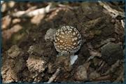 http://img-fotki.yandex.ru/get/9764/15842935.13f/0_d0906_1e14f635_orig.jpg