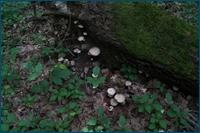 http://img-fotki.yandex.ru/get/9764/15842935.14b/0_d0ec4_a1e88ed4_orig.jpg