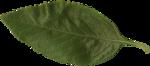 LJS_TellingTheStoriesOfOurLives_Leaf.png