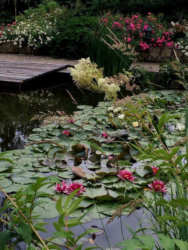 Водоем с лилиями