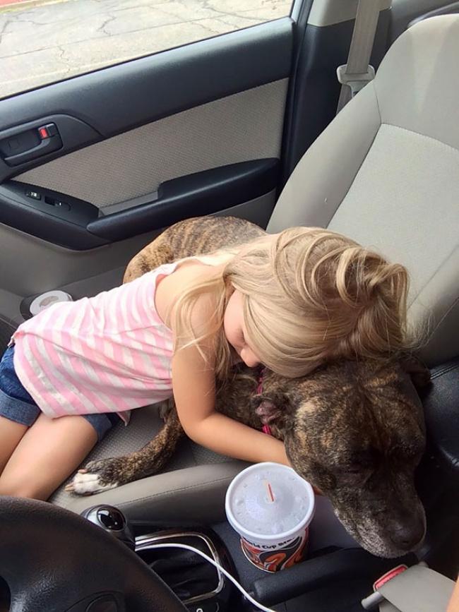 Девочка решила успокоить свою собаку перед походом кветеринару. Собаке будут делать уколы. «Все буд