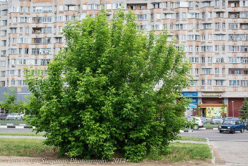 Автор фото: Вячеслав Степанов