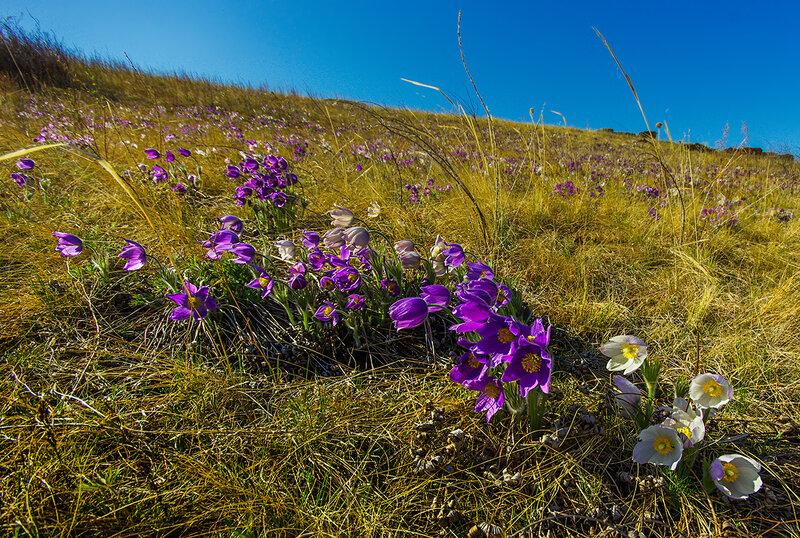 Весна в Хакасии