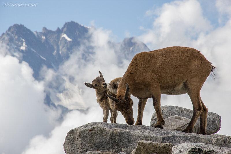 возле рогов-защиты мамочки
