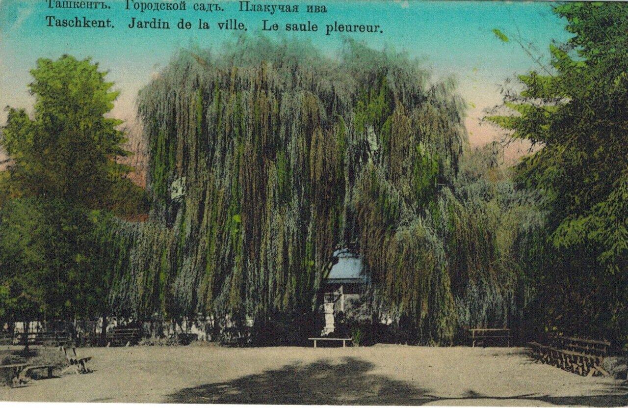 Городской сад. Плакучая ива