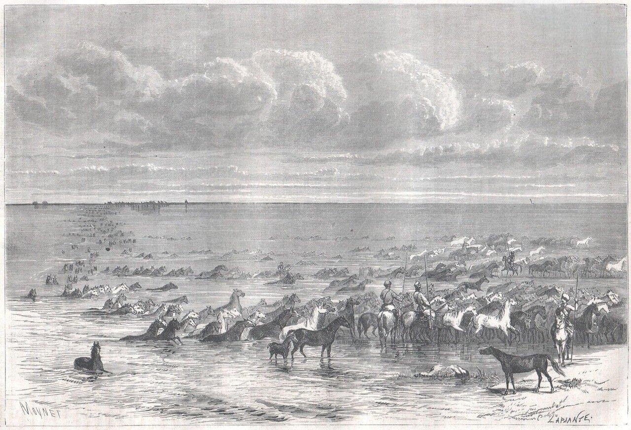 1867. Табун лошадей переплывает Волгу