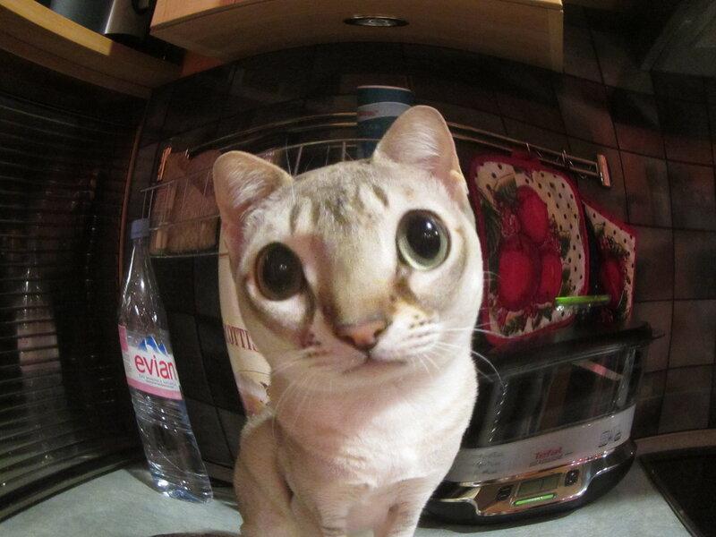 Этого кота я первый раз вижу