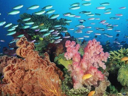 Красивые пейзажи под водой