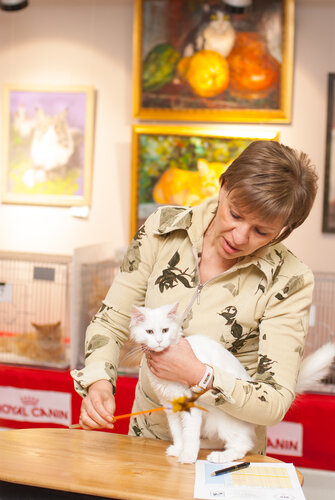 """Международная выставка кошек AFC """"Удивительные лесные кошки"""", 1 марта 2014 г. Сургут 0_b258b_b179b460_L"""
