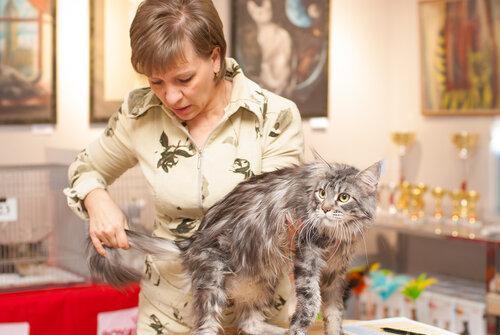 """Международная выставка кошек AFC """"Удивительные лесные кошки"""", 1 марта 2014 г. Сургут 0_b25b2_c2ae3593_L"""